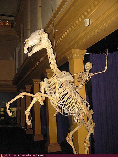 Boney and Horsey
