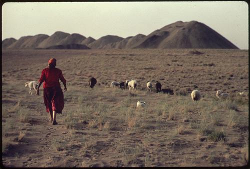 NA sheepherder