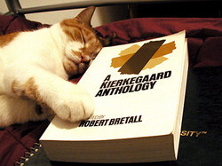 Kierkegaard_kitty_small
